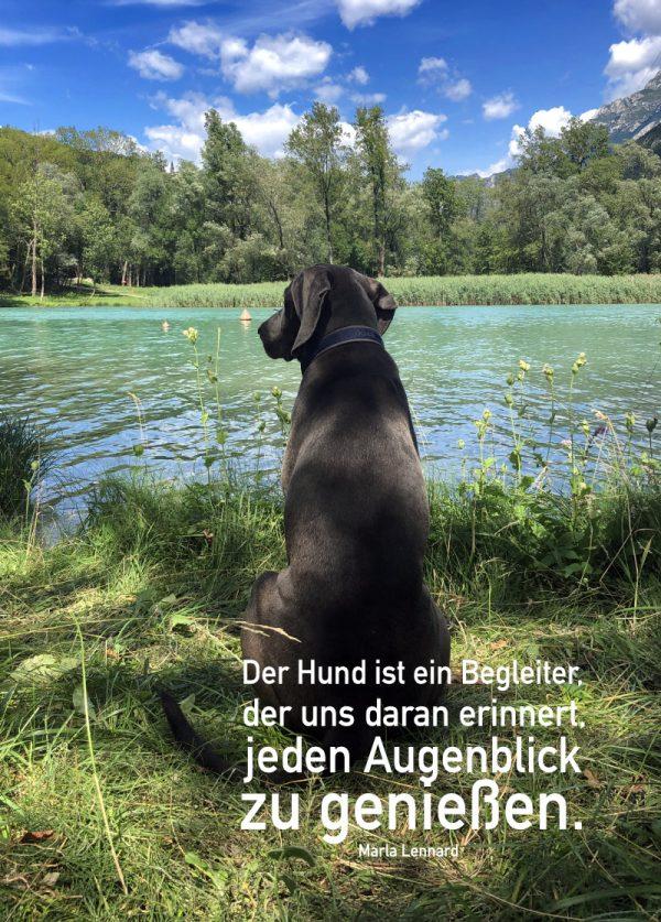 Ansicht Bild Hund vor See